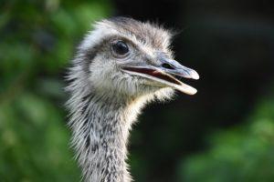 Valentía financiera (o cómo no hacer el avestruz)